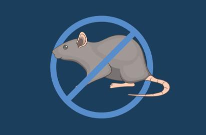 απολύμανση για ποντίκια